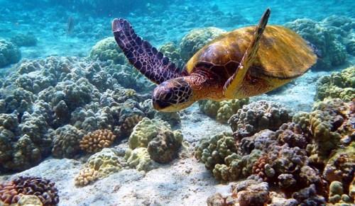 arrecife-de-coral-natural