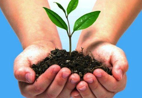 Cuidas el medio ambiente - Como humidificar el ambiente ...