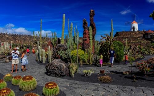 Jard n de cactus lanzarote precios horarios for Jardin de cactus lanzarote
