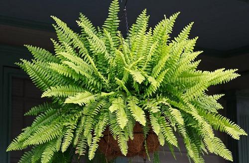 las-plantas-en-feng-shui