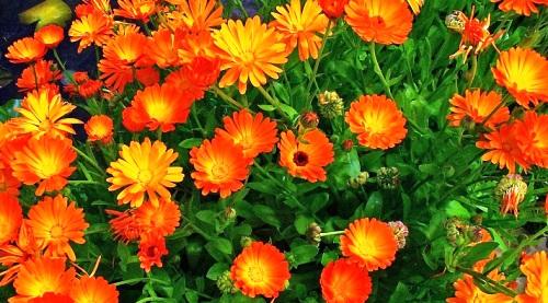plantas-protectoras-del-hogar