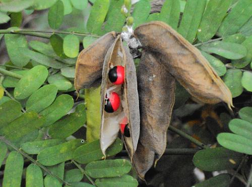 que-plantas-son-venenosas