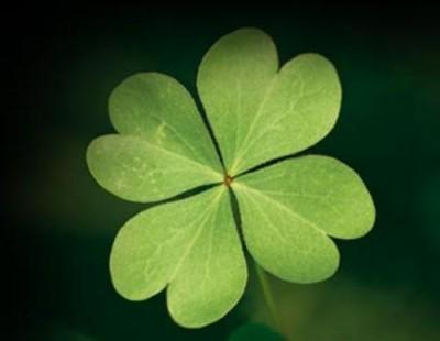 planta de la buena suerte